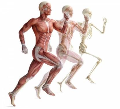 skeleton-muscle-injuries-600x547